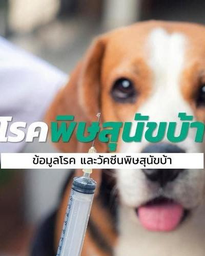 รู้จักกับเกี่ยวกับโรคพิษสุนัขบ้าและก็การฉีดวัคซีนพิษสุนัขบ้า